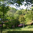 ツツジの咲く庭