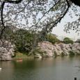 千鳥ヶ淵のお池